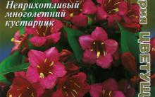 Weigela japonica 'Vaarikad Kellukad'