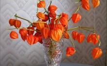Физалис в вазе
