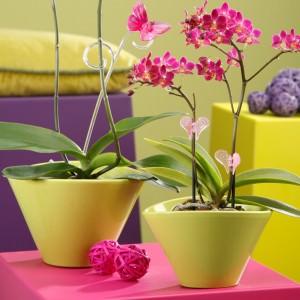 Орхидеи в керамике