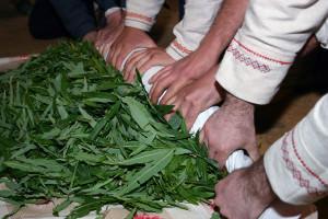 Скручивание листьев иван-чая