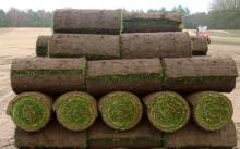 Рулонный газон: какие бывают, укладка и уход