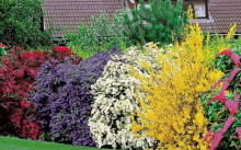 Популярные декоративные кустарники для дачи