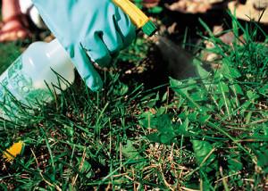 Опрыскивание сорняков