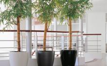 Бамбук в офисе