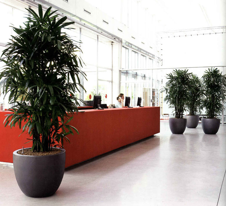 Офис с цветами