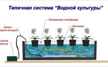 Система водной культуры