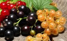 Смородина: сорта, посадка и уход, обрезка и болезни