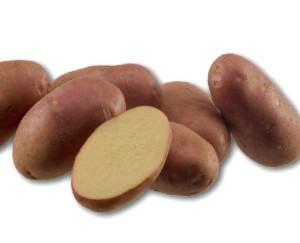 Сорт картофеля Амороза