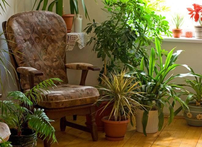 Цветы в доме вокруг кресла