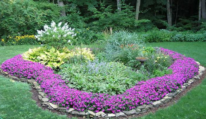Клумба с низкорослыми цветами