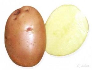 Сорт картофеля Накра