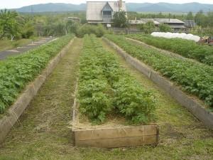 Огород Лядова