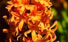 orange boven