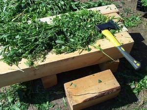 Подготовка мульчи из травы
