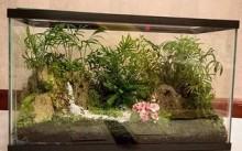 Аквариумный флорариум