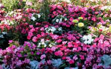 Сад, цветущий до зимы