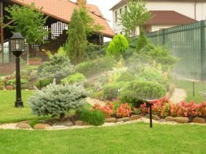 Дождевание растений