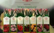 Розы Братьев Топалович