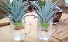 Размножение ананаса