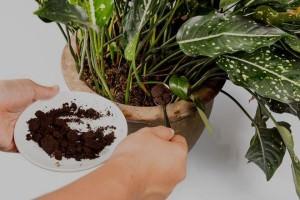 Кофейная гуща для растений