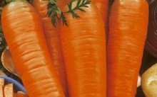 Королева осени морковь