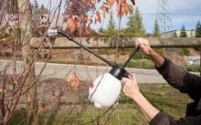 Когда и чем лучше опрыскивать плодовые деревья осенью?