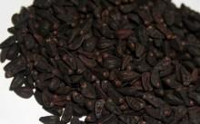 Семена гортензии