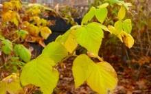 Малина осенью - подкормка