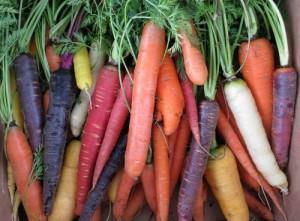 Разнообразие моркови