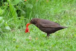 Птица с клубникой