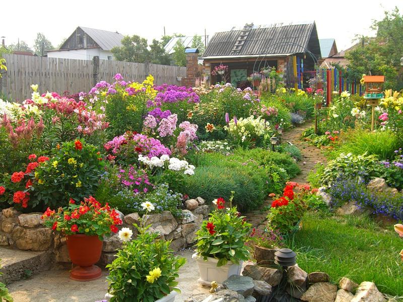 Многолетние цветы для дачи и сада цветущие все лето