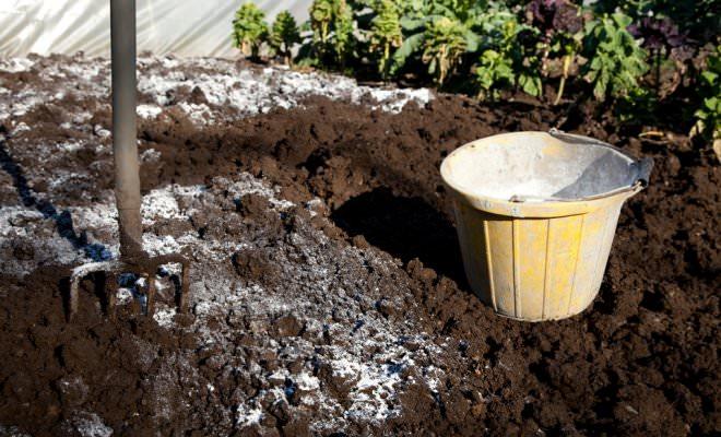 Когда лучше вносить известь в почву