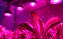 Фитолампы для растений: какие бывают и как выбрать и использовать?