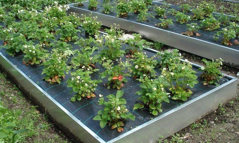 Грядки из оцинкованной стали для огородов и теплиц