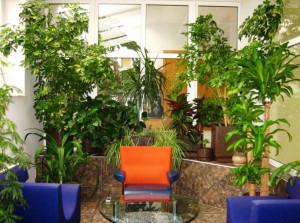 Вариант зимнего сада в офисе