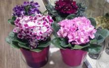 Цветы в кабинет