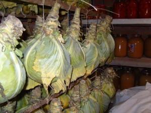 Вариант хранения капусты