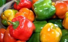 Болгарский перец: посадка и уход, полезные свойства и сорта