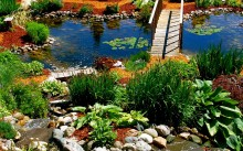 Лучшие растения для пруда