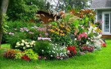 Многолетние садовые цветы: виды и фото
