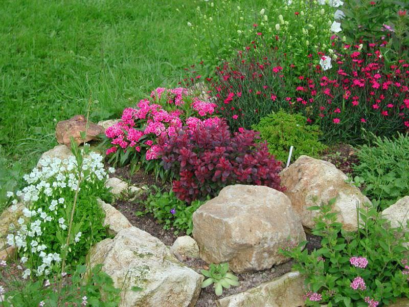 Гвоздика с другими цветами