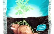 Исполин картофельный