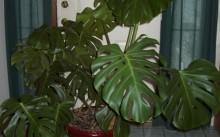 Что означают комнатные растения