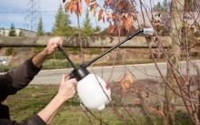 Опрыскивание дерева осенью