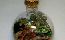 Бутылочный флорариум