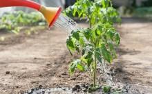 Луночный полив