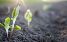 Вегетация растений