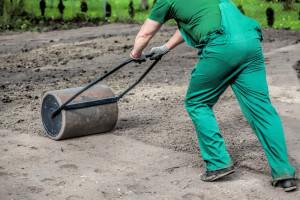Когда сажать газон