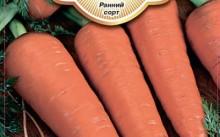 Артек морковь