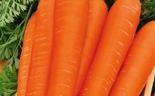 Фея морковь